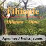 café éthiopie jimma Olmé
